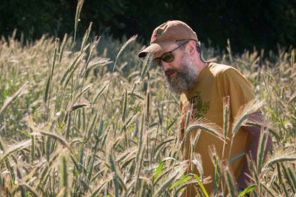 The Beard inspecting the first ever crop of Rogue Farms of Dream Rye.